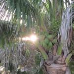 Caribbean Exploration