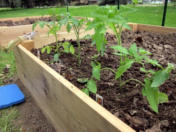 Planting Your Garden with Curious Cuisiniere