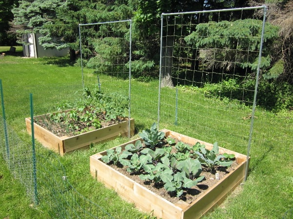 Early June Garden Update with Curious Cuisiniere
