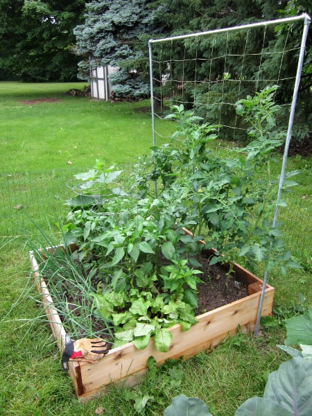 Grow Your Own with Curious Cuisiniere
