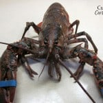 Cooking a Live Lobster: Boiling