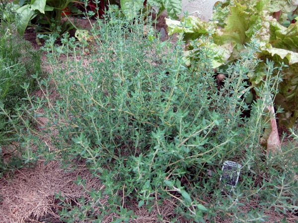 Preserving Herbs with Curious Cuisiniere