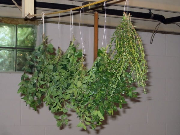 Preserving Herbs by Drying with Curious Cuisiniere