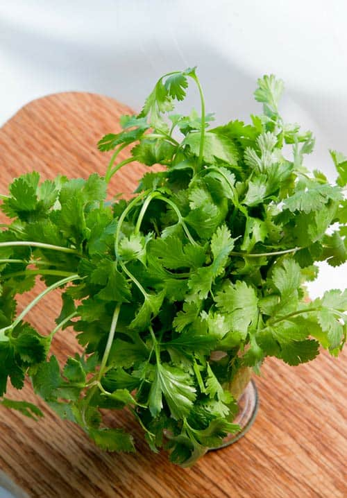 What is cilantro? Cilantro is the name for coriander leaves in some countries. This bright and aromatic herb adds a light flavor to any dish that it accents. | www.CuriousCuisiniere.com