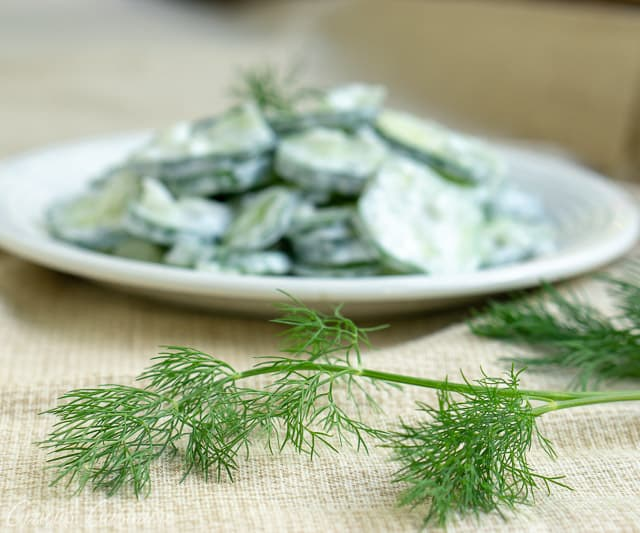 Gurkensalat is a creamy German Cucumber Salad that is the perfect balance of creamy and crisp. It is a great summer side dish recipe for your cookout or potluck dinner!  | www.CuriousCuisiniere.com